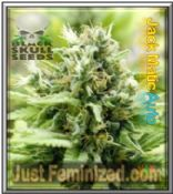Black Skull Auto Jack Matic Feminised Cannabis Seeds